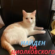 Кот на Циолковского