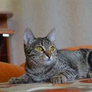 Кошка КРИСТИ
