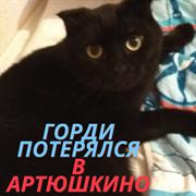 Кот в Артюшкино