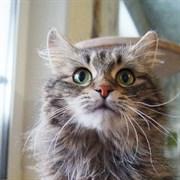 Кошка МАРГОША