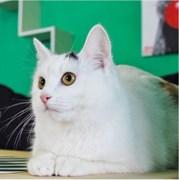 Кошка ГЕРДА