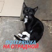 Кошка на Отрадной