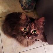 Кошка КОШКА