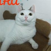 Кошка САФИНА