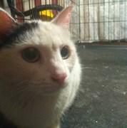 Кошка НЕИЗВЕСТНАЯ