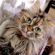 Кошка БУСЕНЬКА