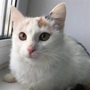 Кошка ЛИНА