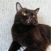 Кошка БРУНГИЛЬДА