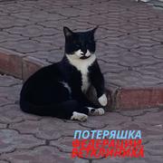 Кошка на ФЕДЕРАЦИИ