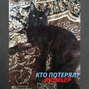 Кот у к/т Люмьер