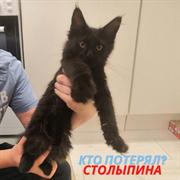 Кошка на Столыпина