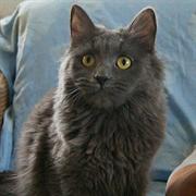 Кошка МЭРИ