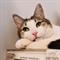 Кошка СЕРАФИМА - фото 10175