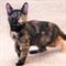Кошка БУСЯ - фото 10328