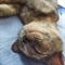 Кошка МАШЕНЬКА - фото 10637