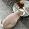 Кошка ДАША - фото 10739