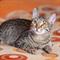 Кошка КРИСТИ - фото 9323