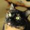 Кошка СОНЯ - фото 9327