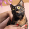 Кошка  ЧЕРРИ - фото 9345